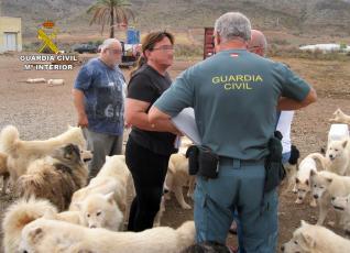 Desmantelan dos perreras ilegales en Molina y Mazarrón