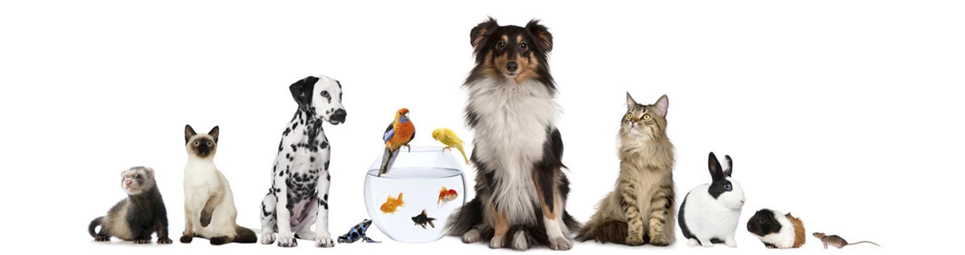 La concienciación sobre la tenencia de animales de compañía llega a los colegios
