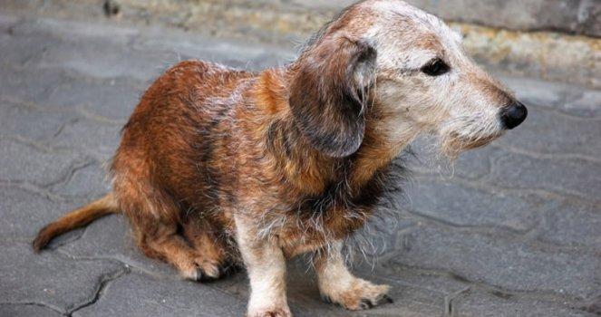 Empresa recogida animales abandonados Lorca denuncia edil de IU