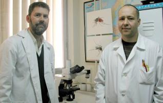 Murcia es el único punto de Europa en el que el mosquito tigre cría en invierno
