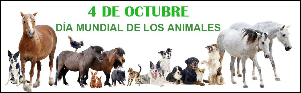 San Francisco de Asís fue el día mundial de los animales