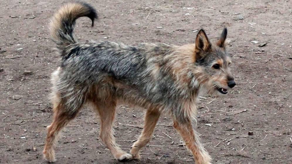 Miles de perros, abandonados en Galicia con la nueva Ley de Bienestar Animal