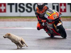Un perro se cuela en Austin en los entrenamientos de MotoGP