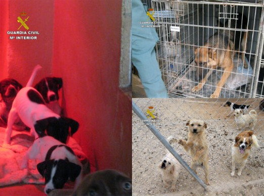 Desmantelan dos perreras ilegales en Mula y Fuente Alamo con 120 canes