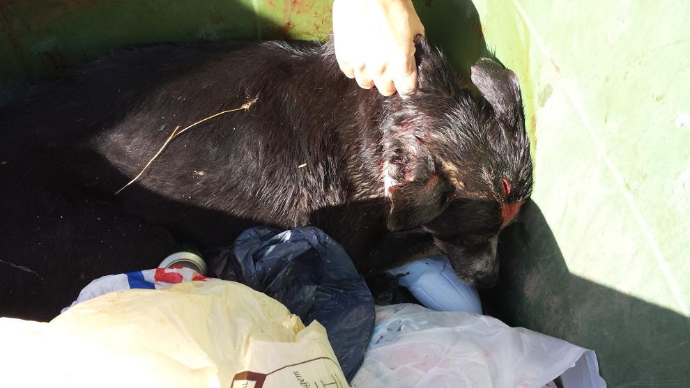 Dan una paliza a un perro y lo tiran a un contenedor en Abarán