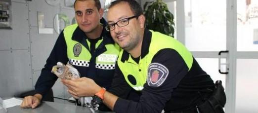 La Policía captura un cernícalo herido