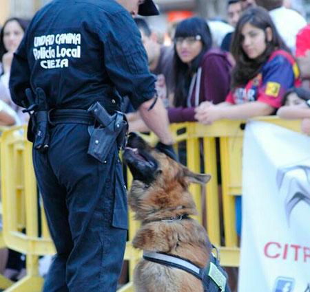 La unidad canina limpia Cieza de drogas