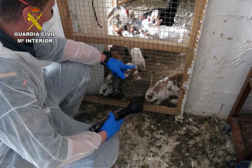 Rescate de animales en Moratalla