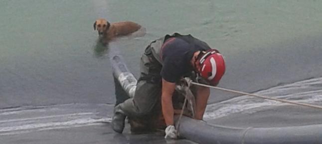 Salvados dos perros de morir ahogados en una balsa de Mazarrón